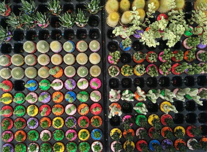 Artemis Garden plants