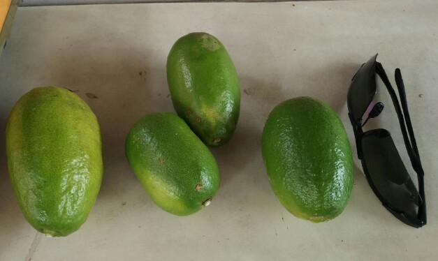 Huge long limes