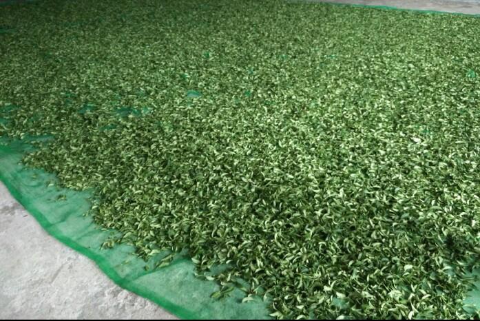 Luye tea factory