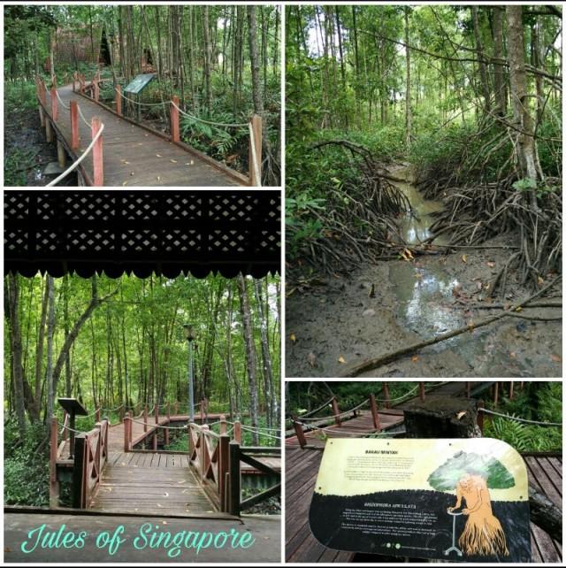Matang mangrove boardwalk kuala Sepetang